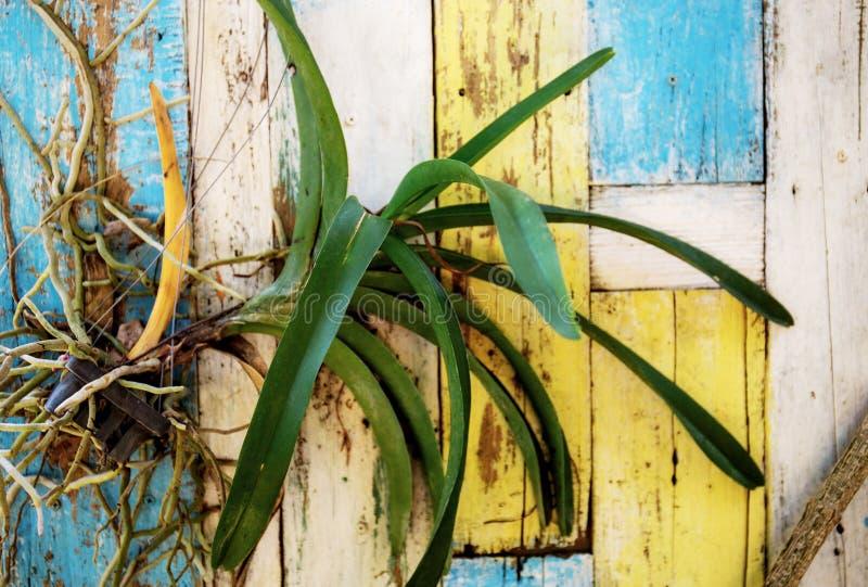 Árboles de orquídea en conserva en de madera fotos de archivo libres de regalías