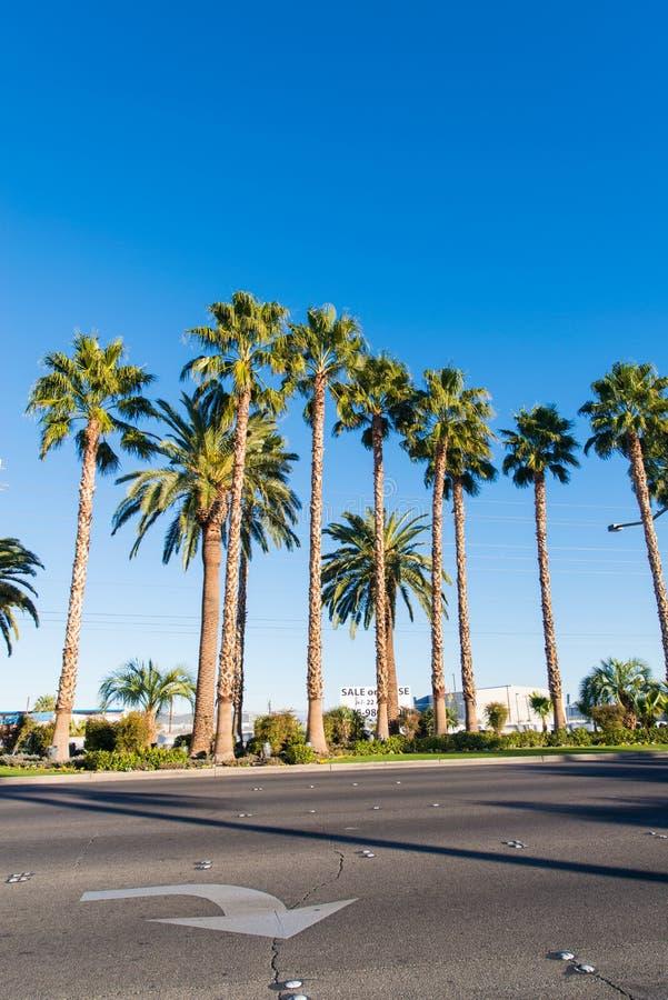 Download Árboles De Palmas En La Playa Durante Imagen de archivo - Imagen de paisaje, paraíso: 41915899