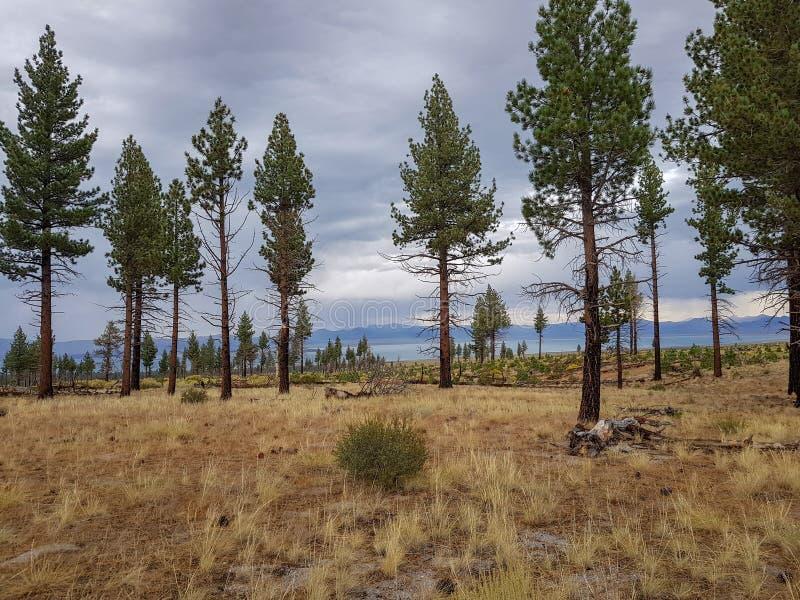 Árboles de pino del bosque que pasan por alto un lago imagenes de archivo