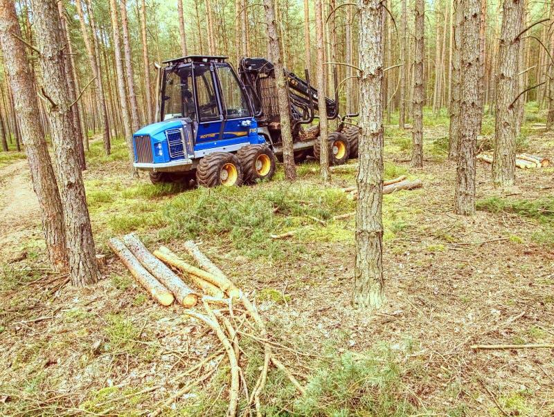 Árboles de pino del corte de la máquina segador Madera resistente del corte de máquina fotografía de archivo