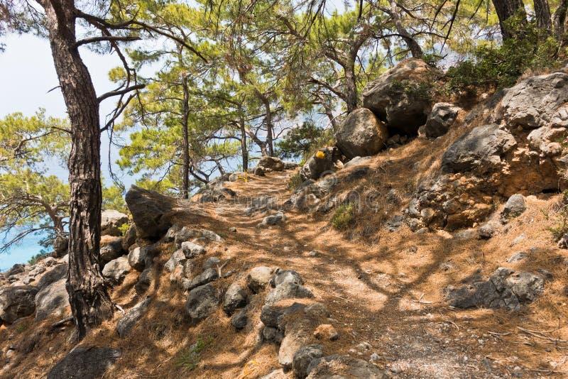 Árboles de pino en el rastro e4 a lo largo de la costa costa entre Loutro y Agia Roumeli en la isla del od Creta del sudoeste imagenes de archivo