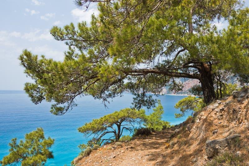 Árboles de pino en el rastro e4 a lo largo de la costa costa entre Loutro y Agia Roumeli en la isla del od Creta del sudoeste fotos de archivo