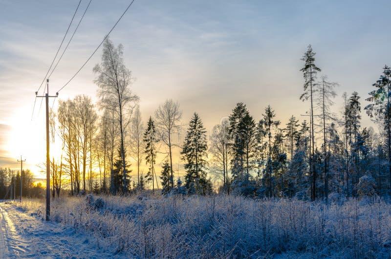 Árboles de pino en invierno por una carretera nacional en la puesta del sol imagenes de archivo