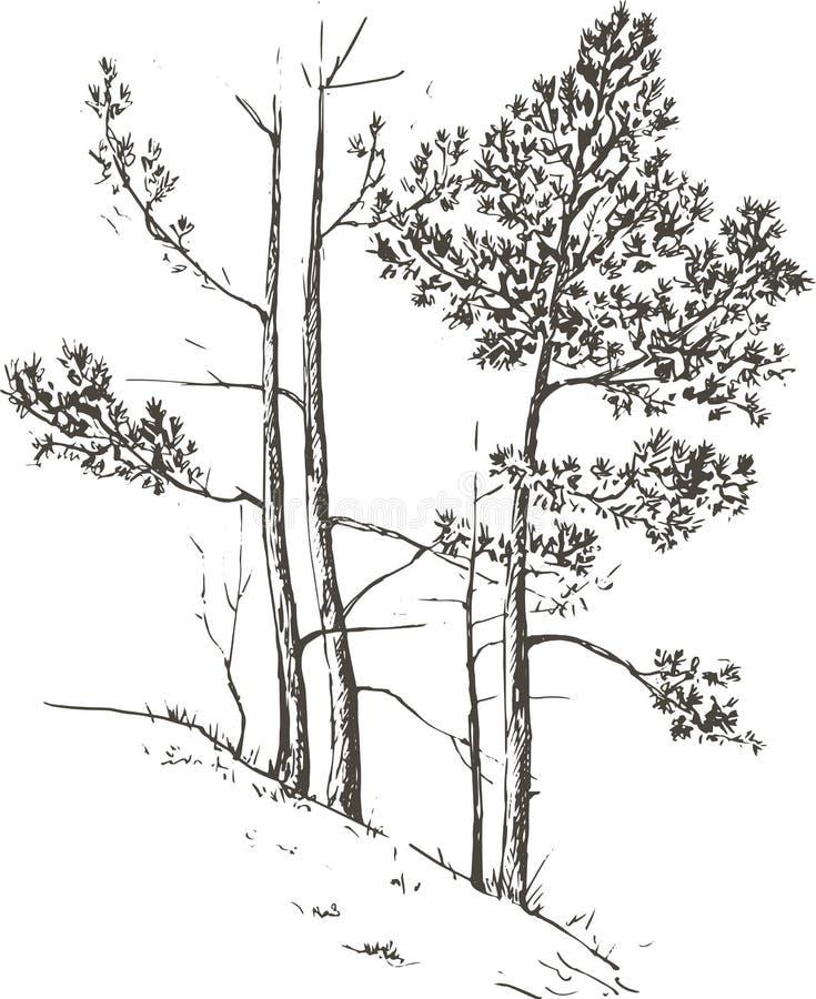 Árboles de pino en la colina stock de ilustración