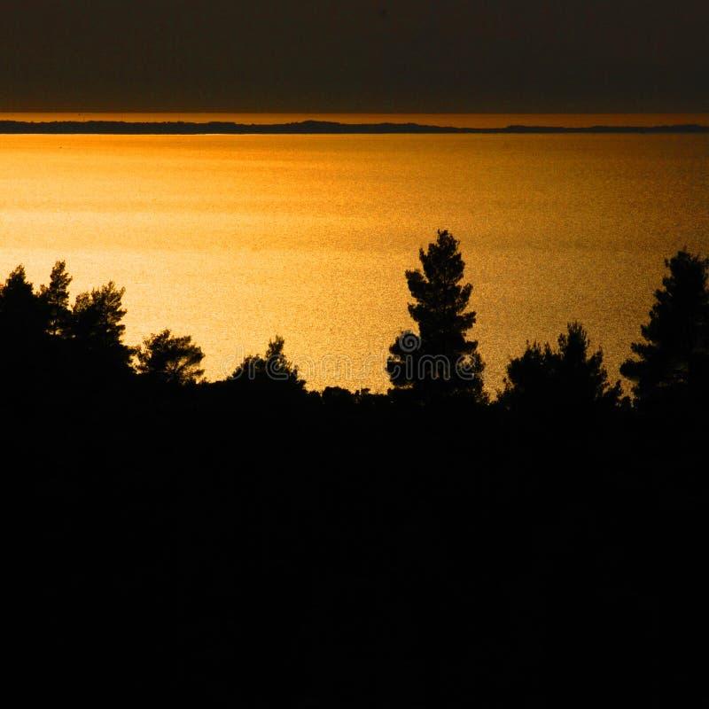 Árboles de pino en la puesta del sol imagen de archivo libre de regalías