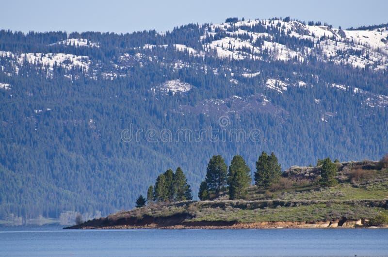 Árboles de pino que se colocan antes de las montañas nevadas foto de archivo