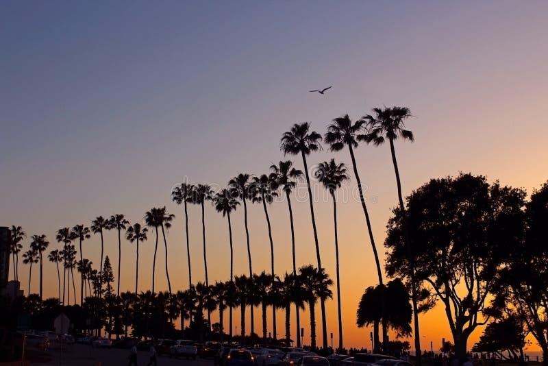 Árboles de Plam, silueta, puesta del sol, ensenada de La Jolla, California foto de archivo
