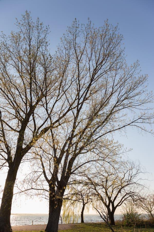 Árboles de Slossoming cerca de un lago en primavera fotos de archivo libres de regalías