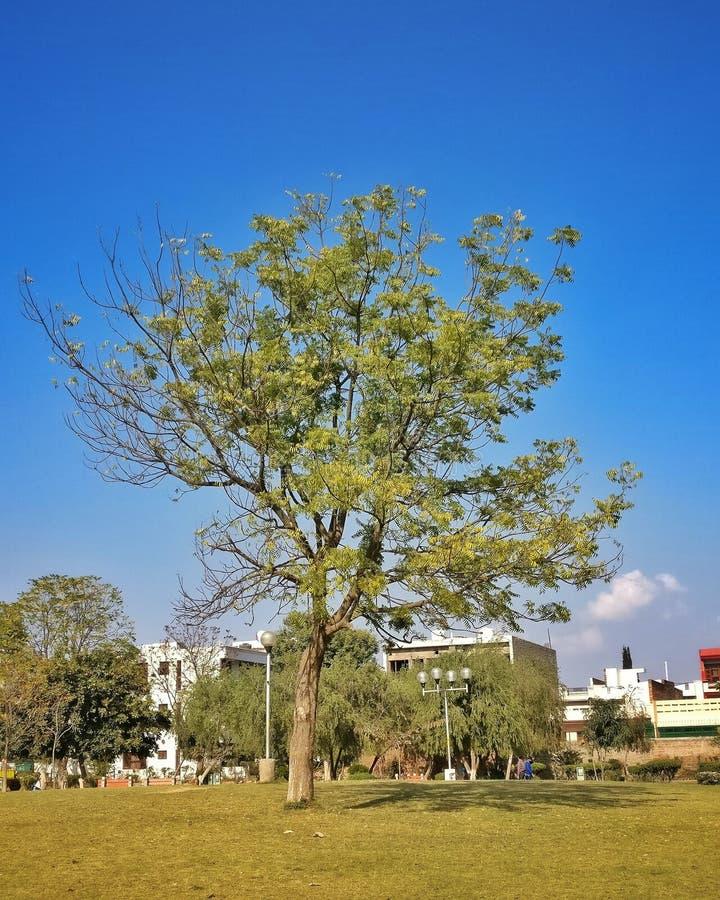 Árboles de un parque en la ciudad la India de Chandigarh fotos de archivo libres de regalías