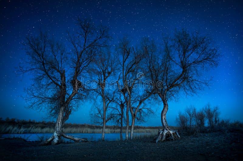 Árboles debajo del cielo nocturno en el desierto foto de archivo libre de regalías