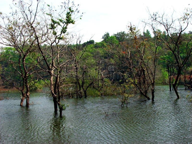 Árboles del agua fotografía de archivo