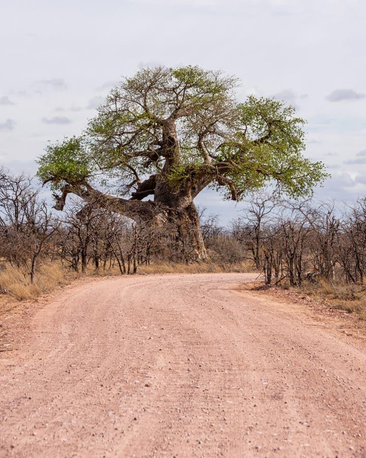 Árboles del baobab por el camino imágenes de archivo libres de regalías