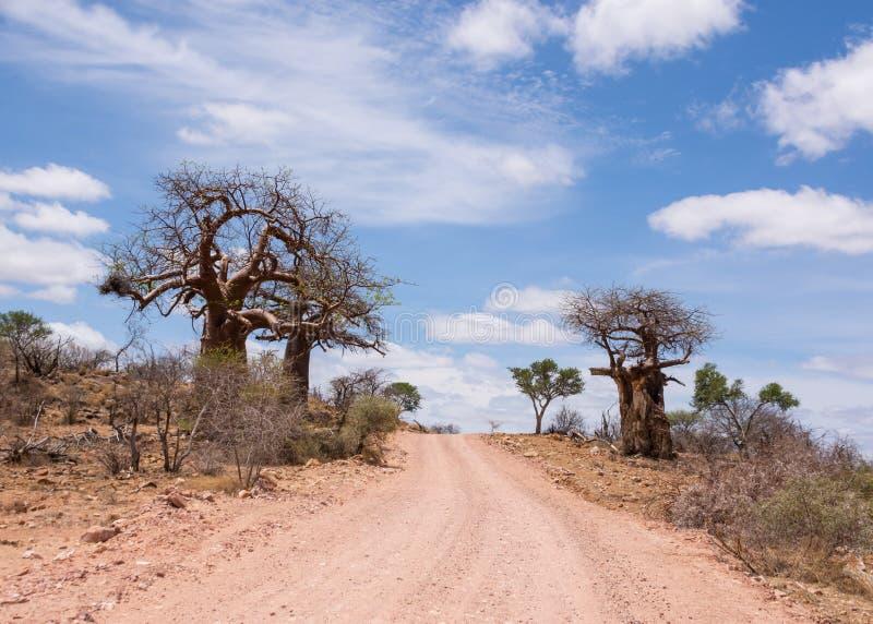 Árboles del baobab por el camino imagenes de archivo