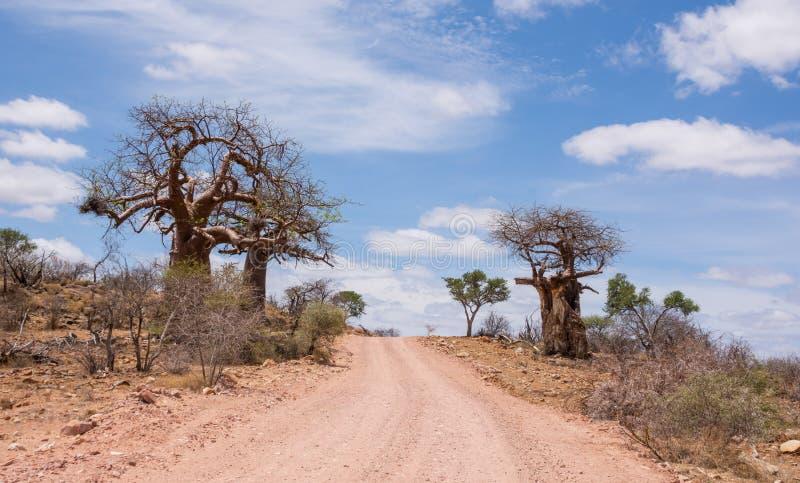 Árboles del baobab por el camino imagen de archivo