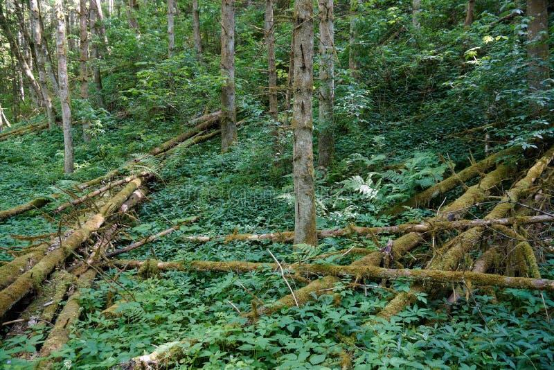 Árboles del bosque negro y plantas verdes caidos paisaje imágenes de archivo libres de regalías