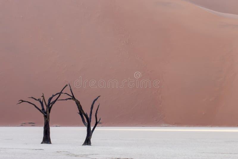 Árboles del desierto - Katherine Keates imagen de archivo libre de regalías