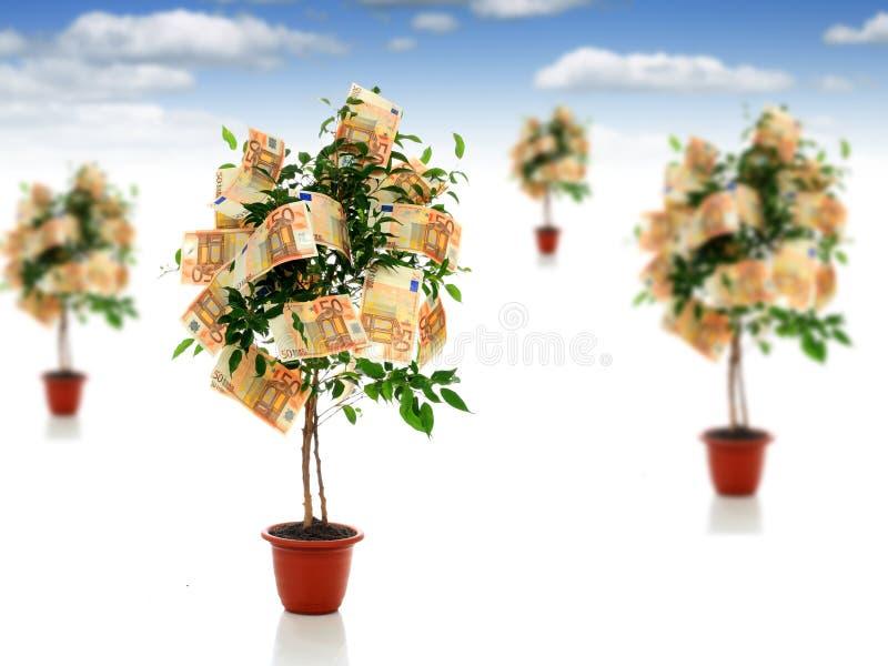 Árboles del dinero. fotografía de archivo libre de regalías