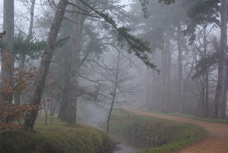 Árboles del Fogginess fotos de archivo libres de regalías