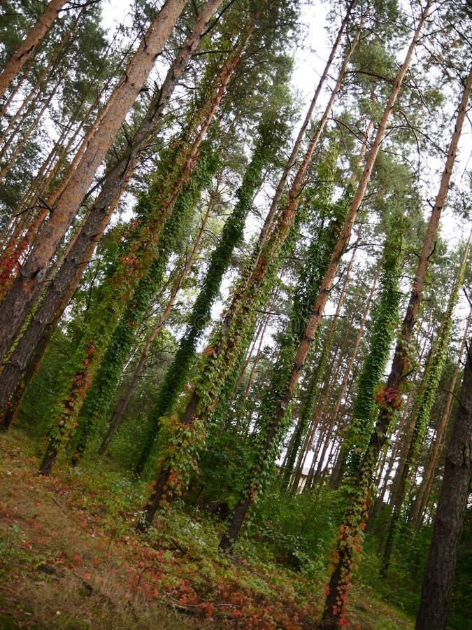 Árboles del fondo del papel pintado de las hojas de maderas imagen de archivo