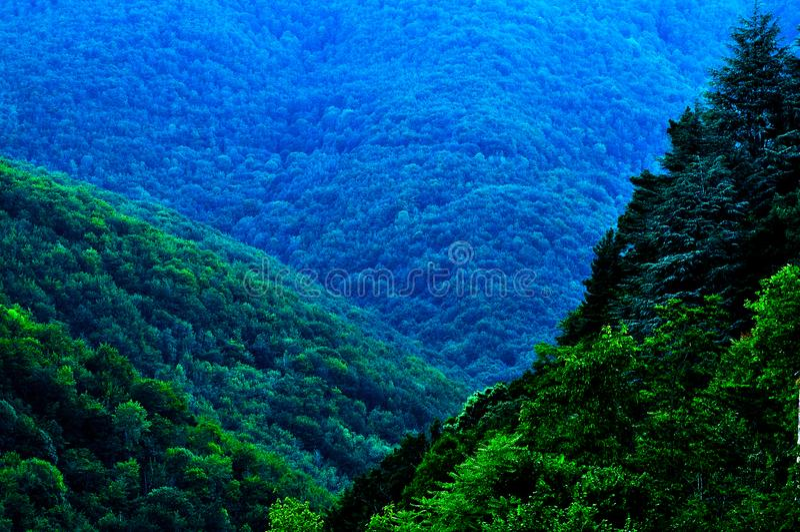 Árboles del Forest Green del verano en la montaña, verano del en de los rboles del ¡de Bosque Ã, La Rioja, España, España fotos de archivo
