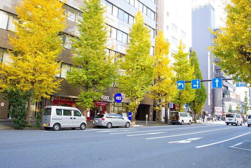 Árboles del ginkgo del borde de la carretera en Tokio, Japón foto de archivo libre de regalías