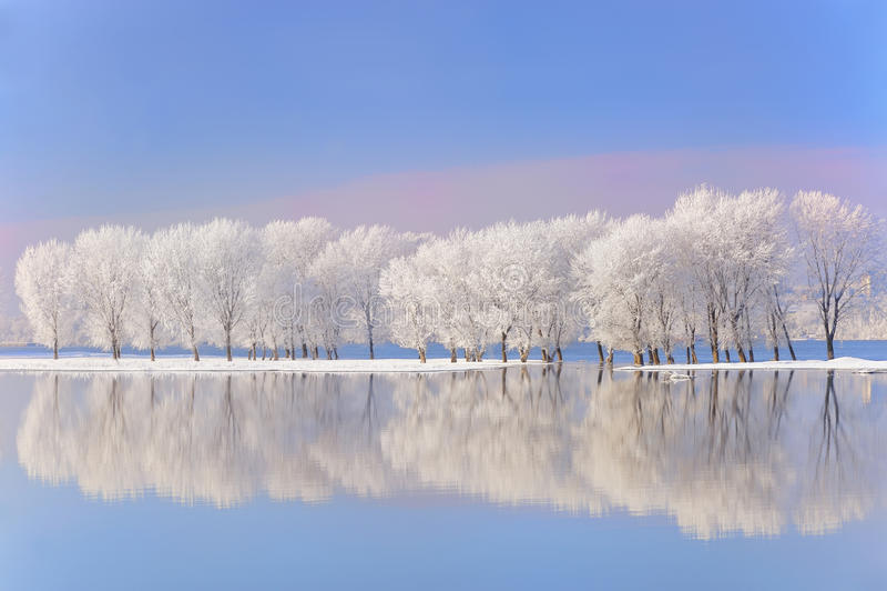 Árboles del invierno cubiertos con helada fotografía de archivo libre de regalías