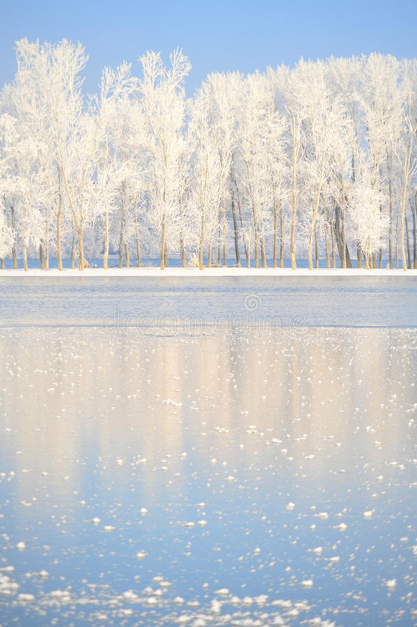 Árboles del invierno cubiertos con helada foto de archivo libre de regalías