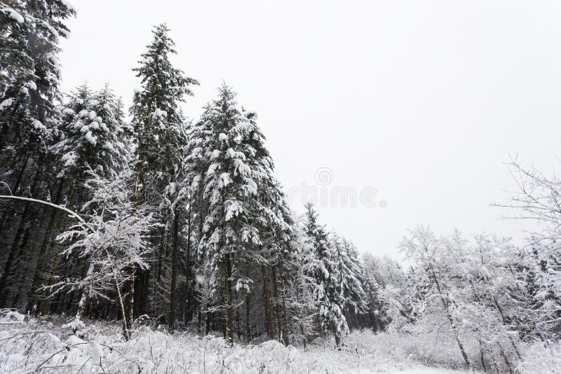 Árboles del invierno cubiertos con nieve imagen de archivo