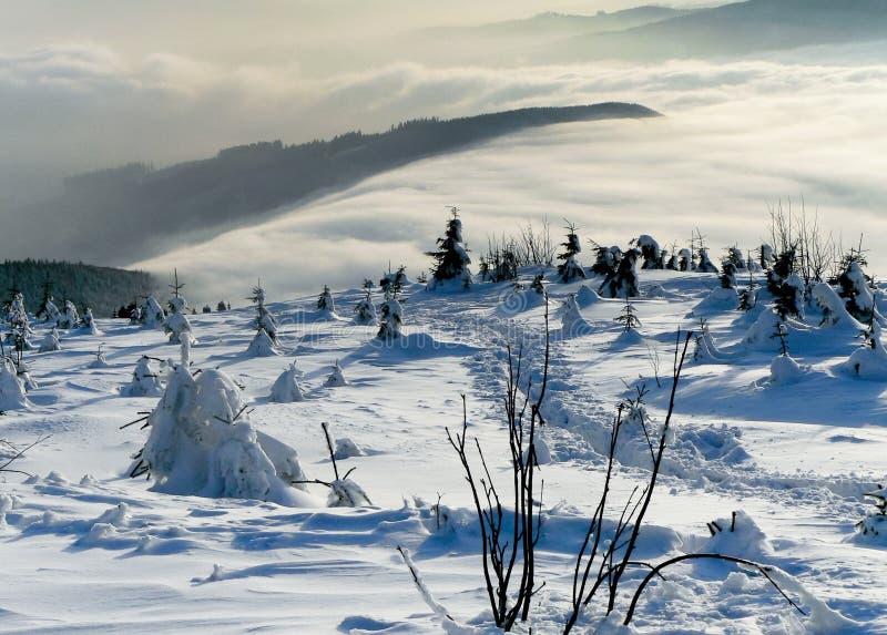 Árboles del invierno cubiertos por la nieve fotos de archivo libres de regalías