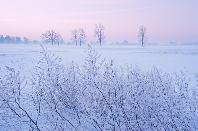 Árboles del invierno en el amanecer fotos de archivo libres de regalías