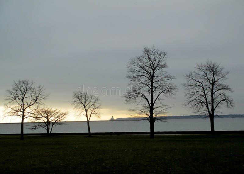 Árboles del invierno en el lago Michigan fotografía de archivo