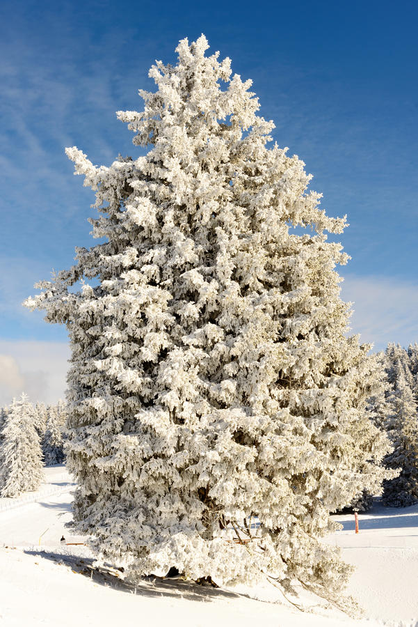 Árboles del invierno en nieve en invierno fotografía de archivo libre de regalías