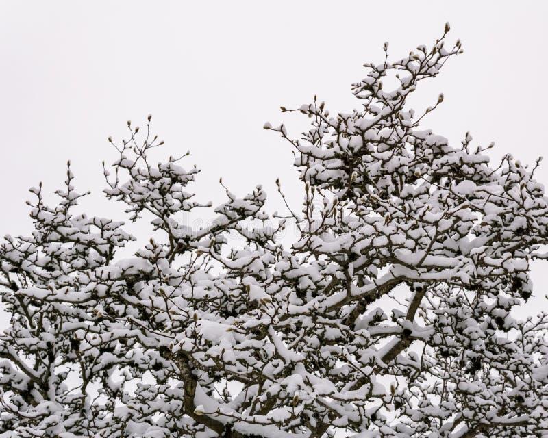 árboles del invierno en paisaje minimalistic de la nieve con el cielo blanco foto de archivo libre de regalías