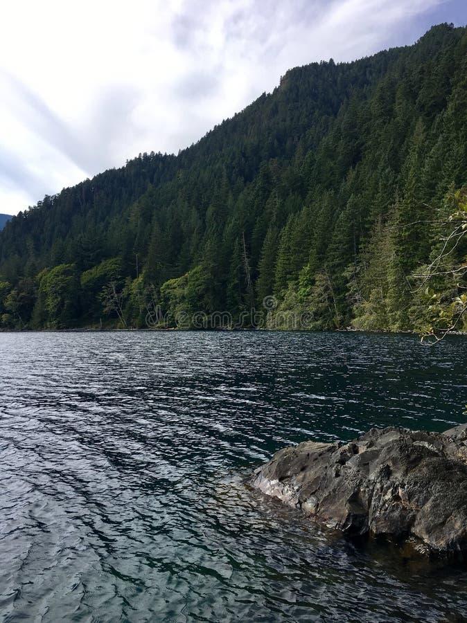 Árboles del lago y de pino fotos de archivo