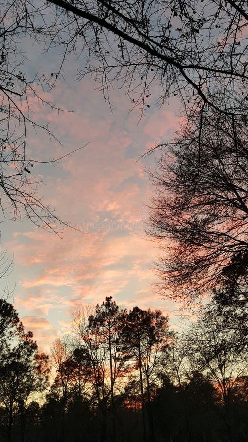 Árboles del negro de la puesta del sol de la Florida imagen de archivo libre de regalías