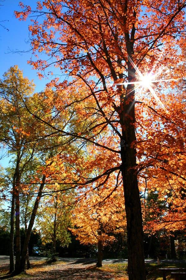 Árboles del otoño fotos de archivo libres de regalías