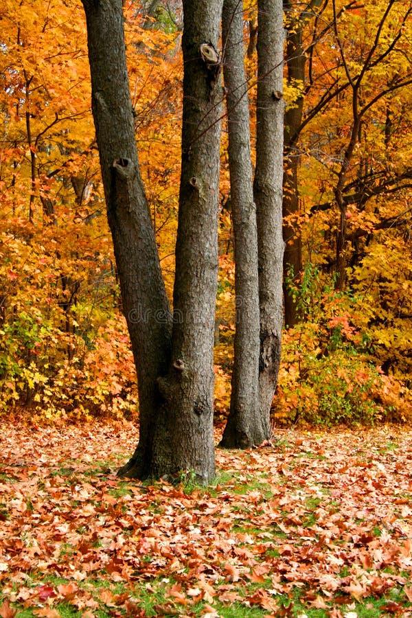 Autumn Trees fotos de archivo