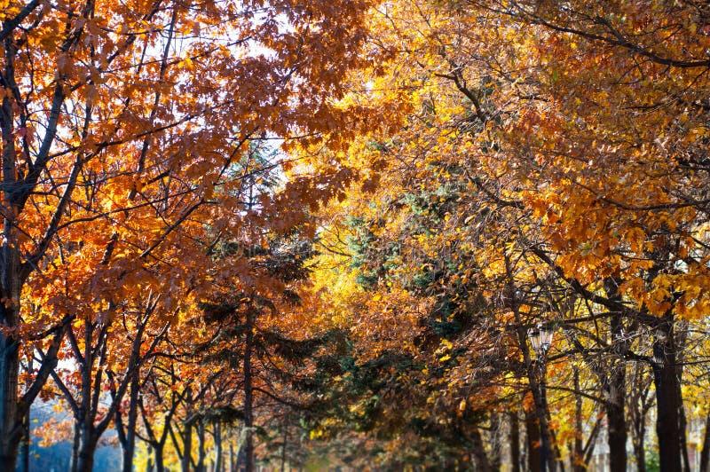 Download Árboles del otoño imagen de archivo. Imagen de otoño - 64209501