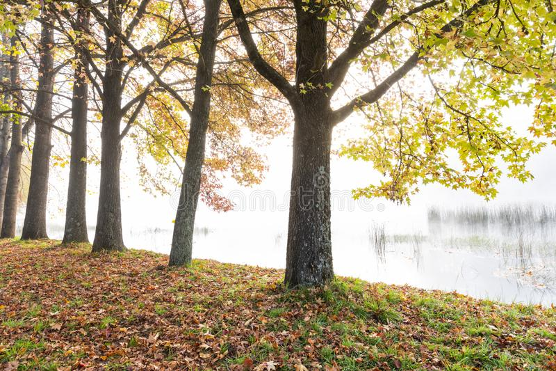 Árboles del otoño al lado de la charca foto de archivo