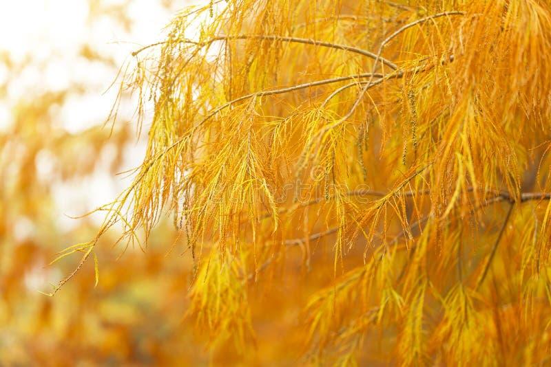 Árboles del otoño en bosque foto de archivo libre de regalías