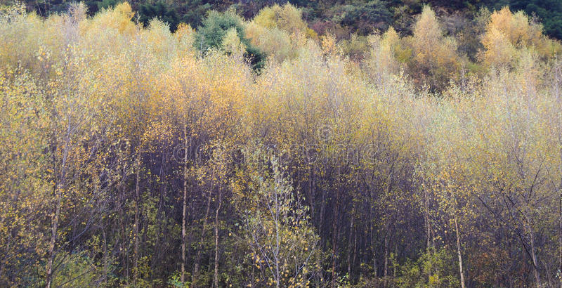 Árboles del otoño en el valle en Jiuzhaigou fotografía de archivo libre de regalías