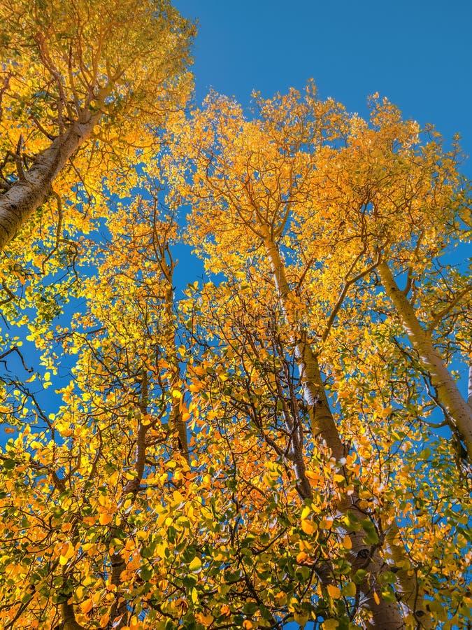 Árboles del otoño en las montañas de Sierra Nevada a principios de octubre fotos de archivo libres de regalías