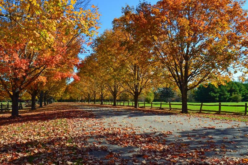 Árboles del otoño en Maine fotos de archivo libres de regalías