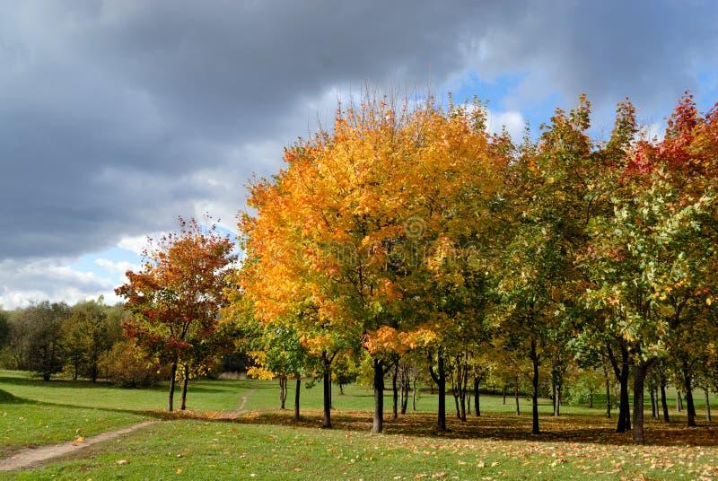 Árboles del otoño en parque imagen de archivo libre de regalías