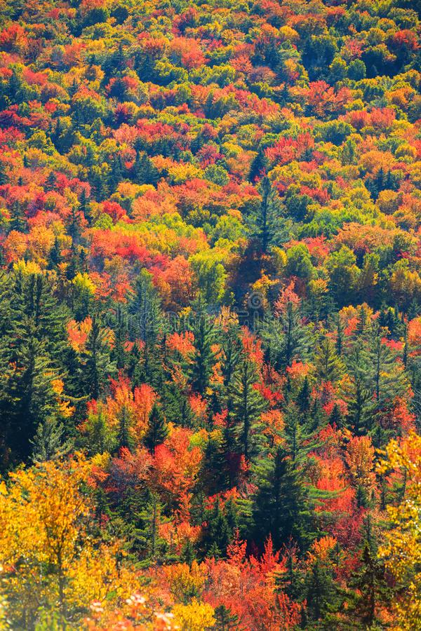 Árboles del otoño en Vermont rural foto de archivo