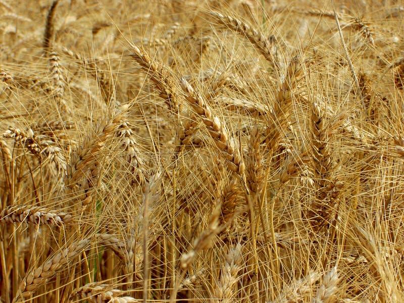 Árboles del pan foto de archivo libre de regalías