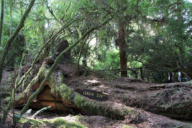 Árboles del parque del misterio imágenes de archivo libres de regalías
