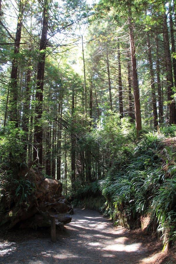 Árboles del parque del misterio fotos de archivo