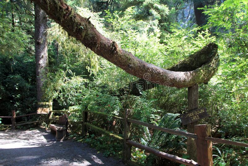 Árboles del parque del misterio foto de archivo