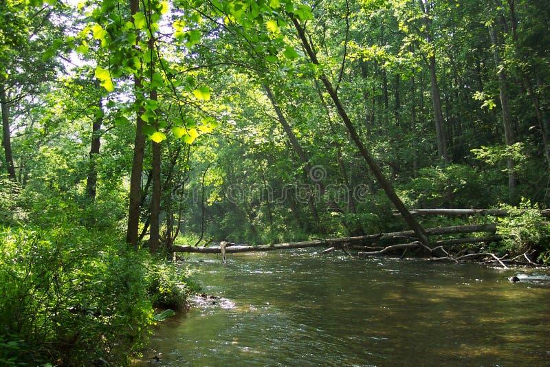 Árboles del río de la pólvora fotografía de archivo libre de regalías